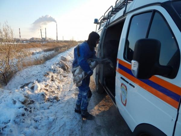 лебедь, птица, Курган, МЧС, спасение|Фото:ГУ МЧС России по Курганской области