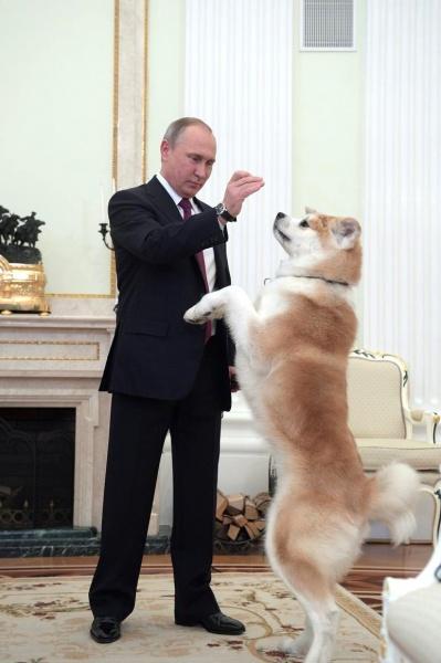 Владимир Путин и собака Фото: пресс-служба президента РФ