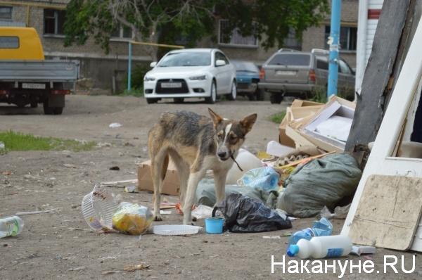бродячая собака|Фото:Накануне.RU