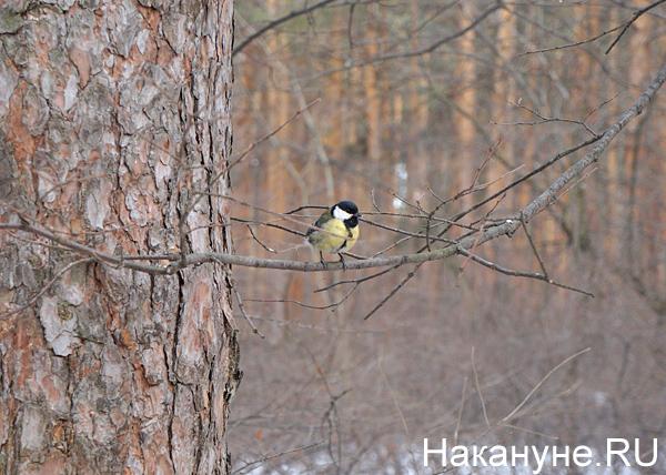 Шарташский лесопарк, птица|Фото: Накануне.RU
