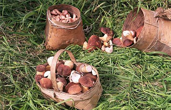 грибы сбор дикорос(2006)|Фото: www.admhmao.ru