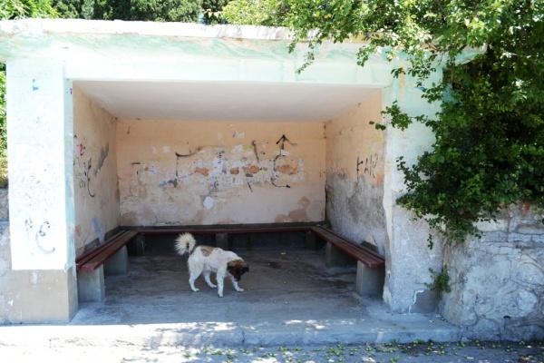 остановка, собака, алупка Фото:администрация Ялты