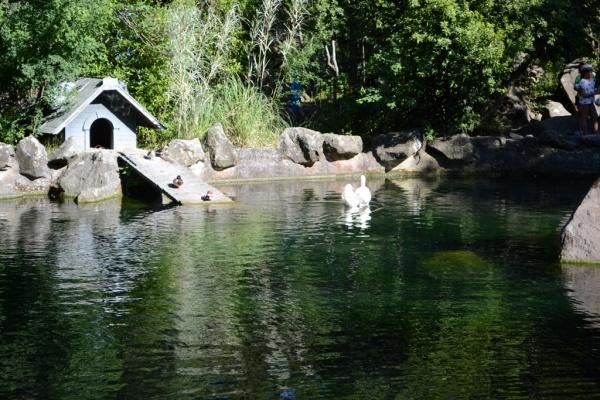 воронцовский парк, озеро, лебедь, юбк, алупка Фото:администрация Ялты