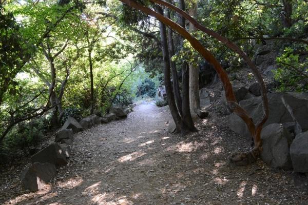 воронцовский парк, алупка, юбк, кипарисы, крым Фото:администрация Ялты