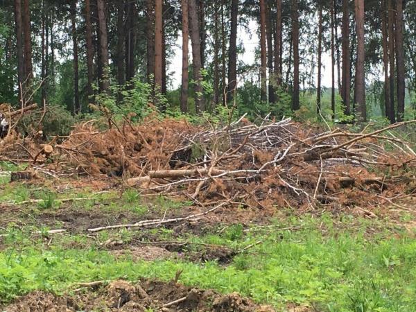 вырубка, лес(2017)|Фото: Накануне.RU