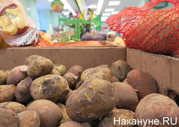 овощи, картофель(2017) Фото: Накануне.RU