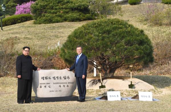 Ким Чен Ын и Мун Чжэ Ин посадили дерево на демаркационной линии(2018)|Фото: www.koreaherald.com