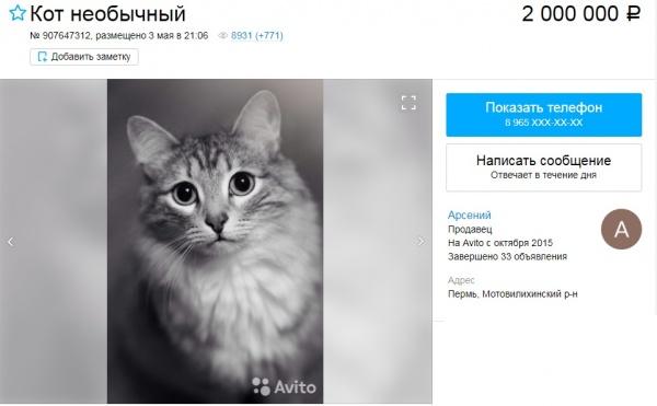 кот, продажа, авито, объявление(2018)|Фото: avito.ru