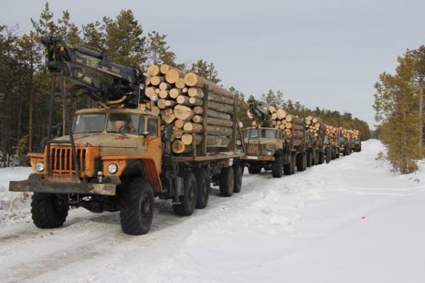 Вагайский район вырубка леса 31 га(2018) Фото: Пресс-служба УМВД по Тюменской области