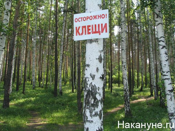 природа лес береза осторожно клещи табличка|Фото: Накануне.ru
