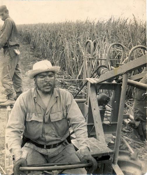 че Гевара науборке сахарного тростника в 1963 г.(2018) Фото: http://en.granma.cu