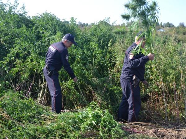 Полицейский конопля ижевск семена конопли