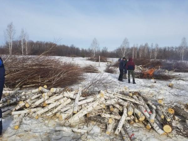 вырубка деревьев вдоль береговой линии Шершневского водохранилища(2019)|Фото: ОНФ Челябинская область