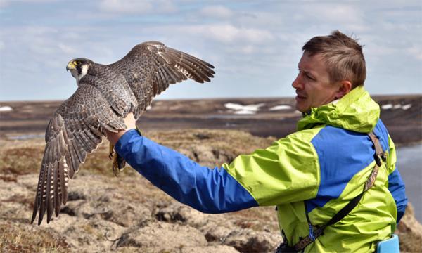 экспедиция Ямал-Арктика, птица(2019)|Фото: yanao.ru