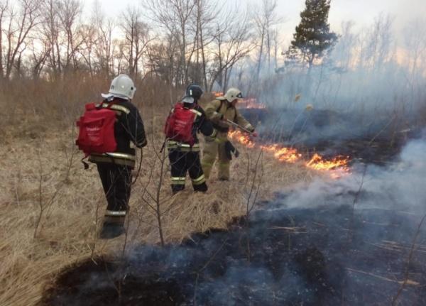 пожар, огонь, леса, МЧС(2019)|Фото:ГУ МЧС России по Курганской области