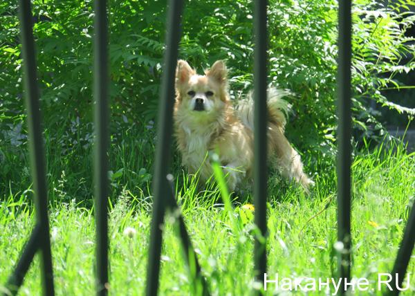 собака(2019)|Фото: Накануне.RU