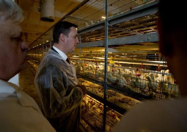 Дмитрий Патрушев, министр сельского хозяйства РФ,(2019)|Фото: пресс-служба губернатора Челябинской области