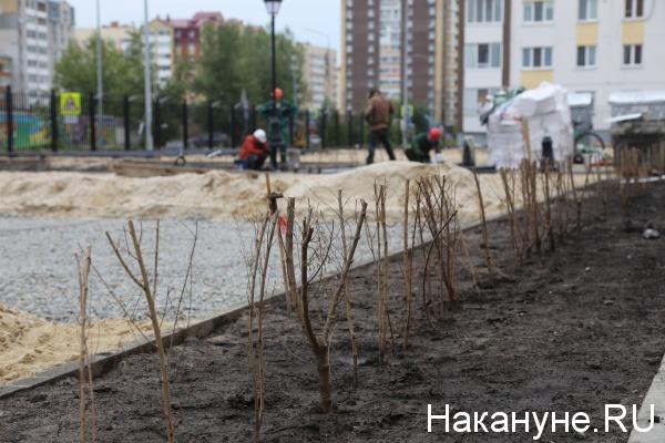 благоустройство, кустарник(2019) Фото: Накануне.RU
