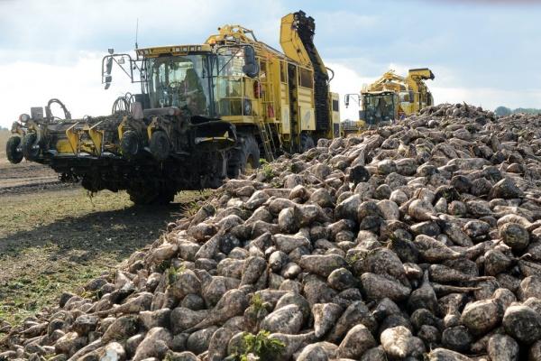 сахарная свекла, уборочная компания, апк, сельское хозяйство, комбайн(2019) Фото:пресс-служба администрации Липецкой области