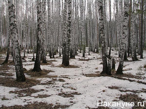 природа весна лес(2008) Фото: Накануне.ru