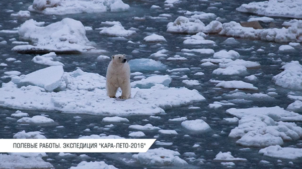 """Презентация """"Роснефти"""", """"Программа исследования ключевых видов арктических экосистем""""(2020) Фото: Презентация """"Роснефти"""""""
