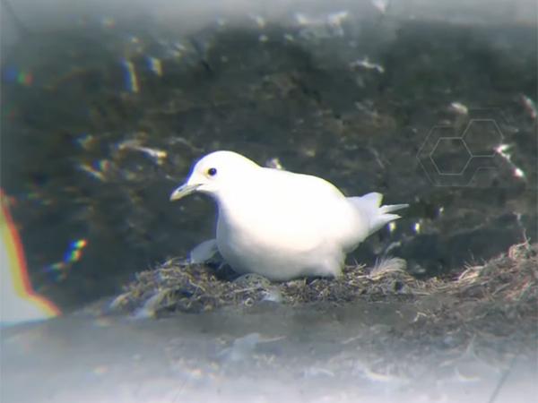 """белая чайка(2020) Фото: презентация """"Роснефти"""""""
