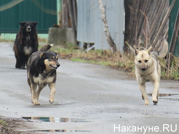 Собаки(2020) Фото: Накануне.RU