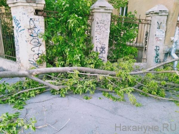 ураган, упавшее дерево(2020)|Фото: Фото: Накануне.RU