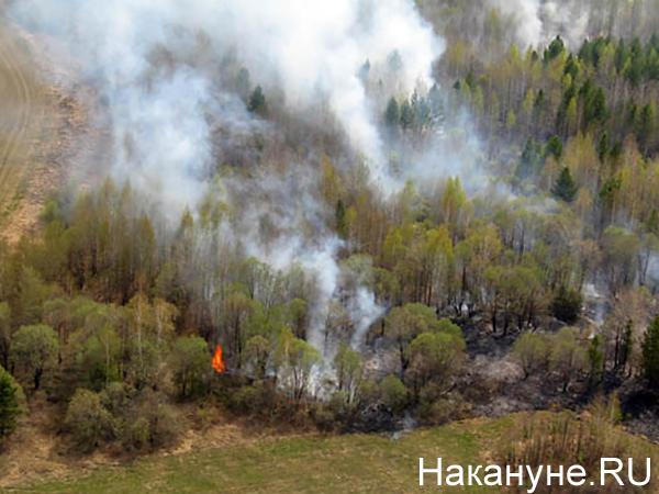 Лесной пожар(2020)|Фото: Накануне.RU