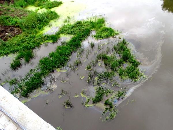 река Миасс, нефтепродукты,(2020) Фото: Юрий Латышев, facebook.com/LatyshevYuryVladimirivich