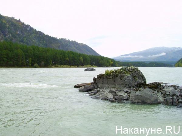 Река Катунь на Алтае(2020)|Фото: Накануне.RU