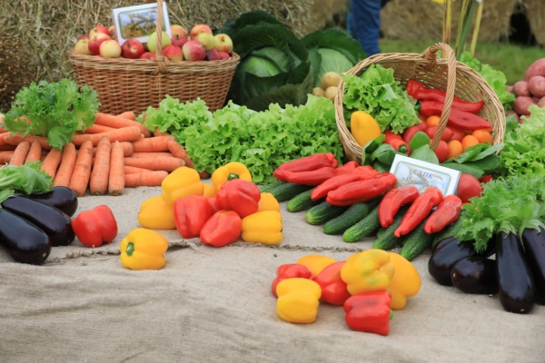 яблоки, перец, огурец, морковь, капуста, салат, баклажан, сельское хозяйство, овощи, продукты(2020)|Фото: vologda-oblast.ru