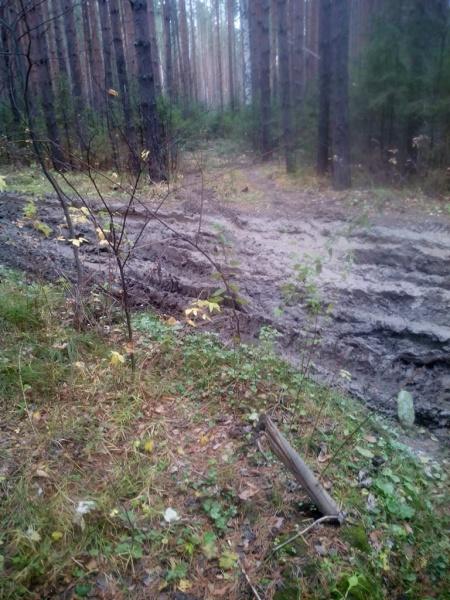 Вырубка леса неподалёку от Баранчинского(2020)|Фото: инициативная группа