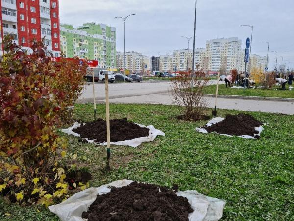 нижневартовск, озеленение, лопата, саженцы, благоустройство(2020)|Фото:пресс-служба администрации Нижневартовска