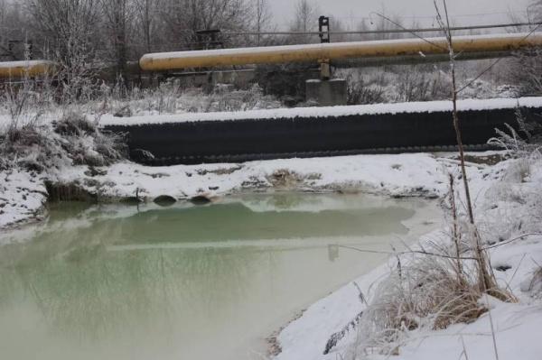 зеленый патруль, кама, толыч, река, экология(2020)|Фото: greenpatrol.ru