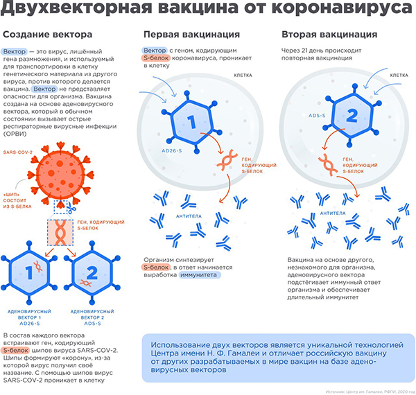 Спутник V, вакцина от коронавируса(2020)|Фото: Центр им. Гамалеи, РФПИ
