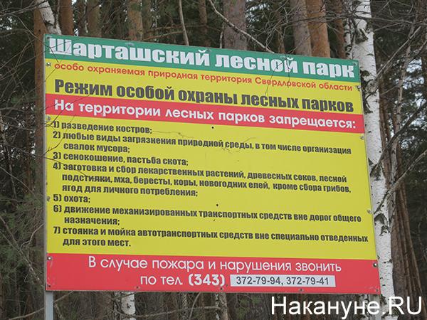 Шарташский лесной парк(2021) Фото: Накануне.RU