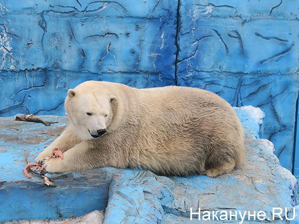 Екатеринбургский зоопарк(2021)|Фото: Накануне.RU