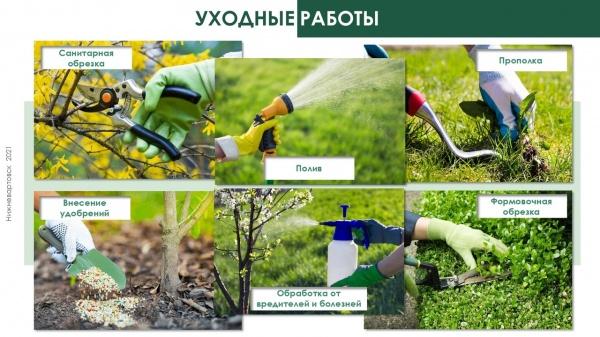 графика, озеленение, нижневартовск, уход за растениями(2021) Фото: пресс-служба администрации Нижневартовска