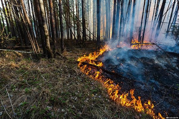 Лесной пожар(2021)|Фото: Департамент информационной политики Свердловской области /  Алексей Зарицкий