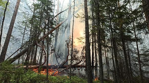 Пожар в заповеднике Денежкин камень(2021) Фото: facebook.com / Anna Kvashnina