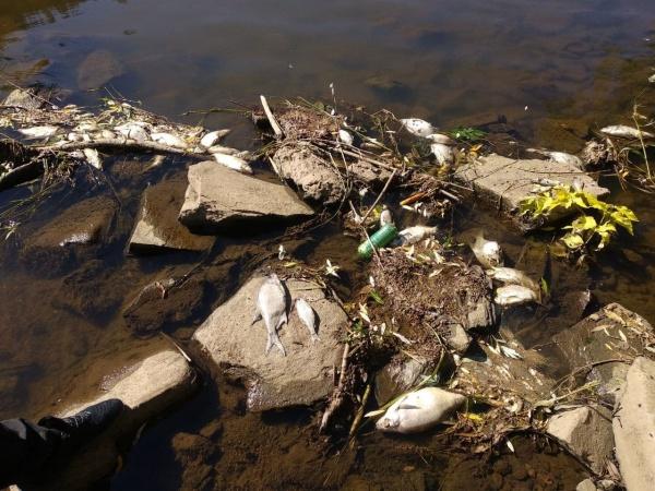 мор рыбы, река Ай,(2021)|Фото: Гражданский патруль
