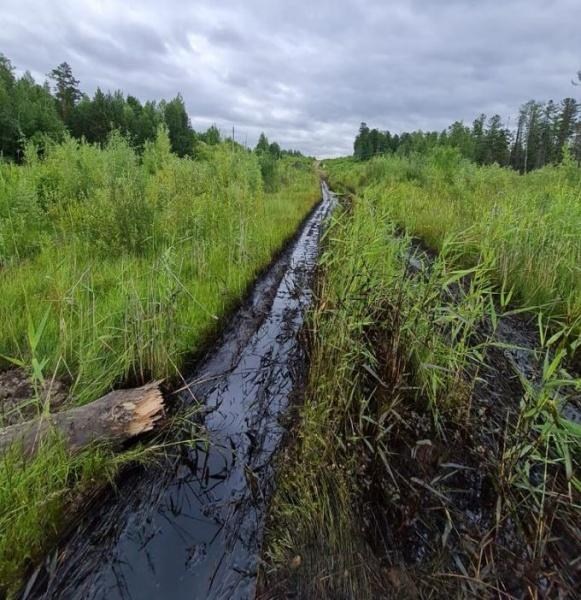 разлив нефти, ручей, экология(2021)|Фото: Пресс-служба АО «Транснефть – Сибирь»