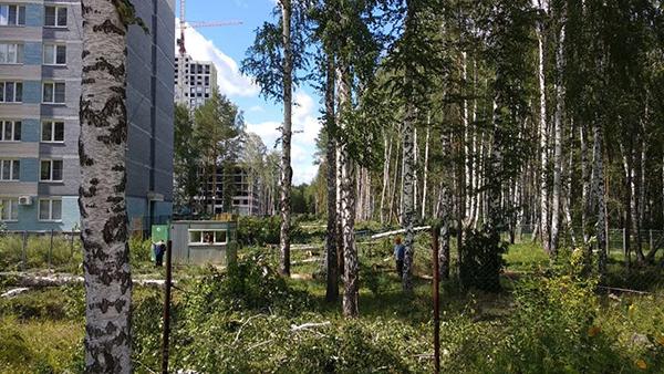 Вырубки Березовой рощи в Академическом районе Екатеринбурга(2021) Фото: источник Накануне.RU