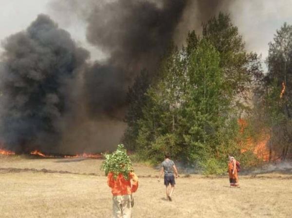 лесной пожар в Башкирии(2021)|Фото: t.me/kushtay