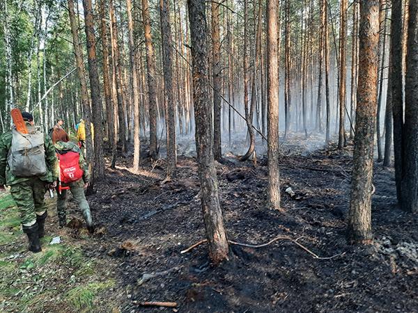 Пожар под Первоуральском в районе озера Глухое(2021)|Фото: facebook.com/urales66