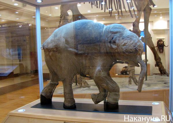 мамонтенок Люба музей шемановского Салехард|Фото: Накануне.RU
