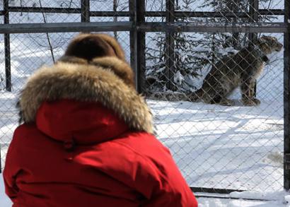 путин владимир премьер-министр снежный барс ирбис(2011)|Фото: premier.gov.ru