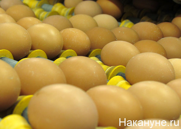 птицефабрика яйцо|Фото: Накануне.ru