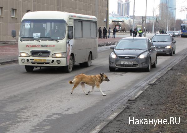 автопробег против плохих дорог екатеринбург собака|Фото: Накануне.RU